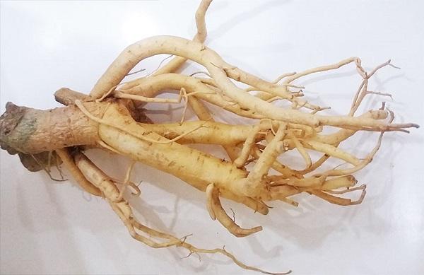rễ đinh lăng chữa yếu sinh lý